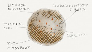 Seed Ball Anatomy