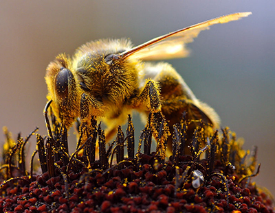Help the bees