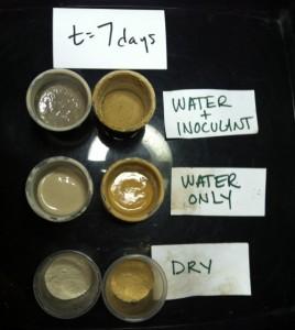 7-dry