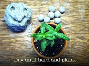 8-make-seed-balls