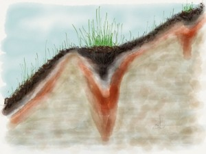 Plants and soil formation respond to subtle gradients on a slope.