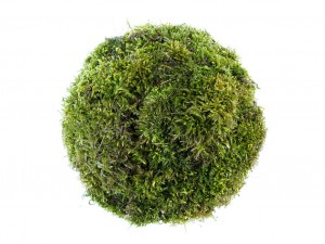 Kokedama - Moss Ball